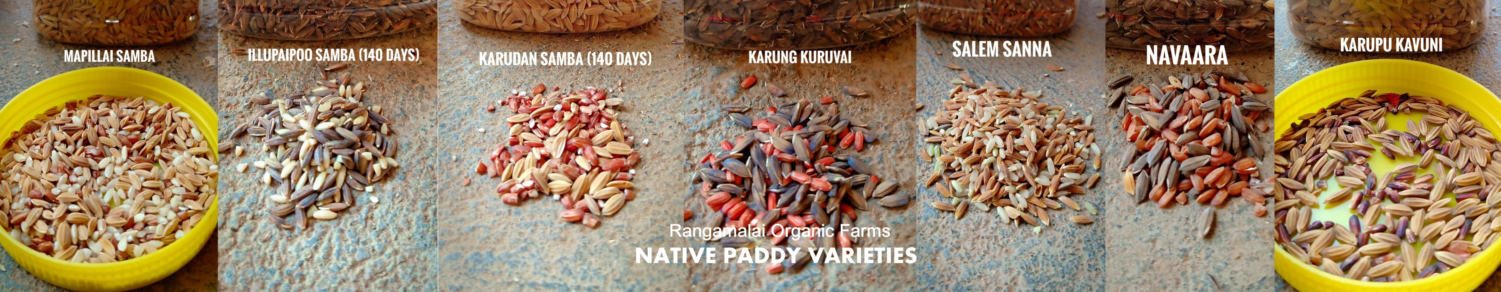 Traditional Paddy Varieties